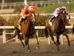 Top Starlet Pair Debut On Turf in Providencia