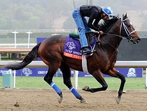Chosen Miracle - Breeders' Cup 2012