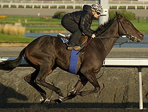 Reporting Star at Woodbine, 10/14/2014