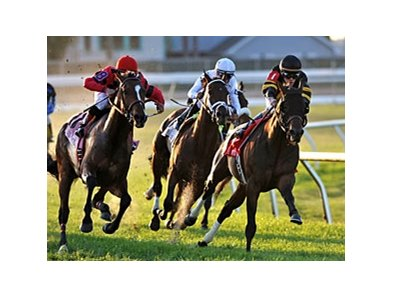 "Amira's Prince heads home to victory in the Mervin H. Muniz Memorial Handicap.<br><a target=""blank"" href=""http://photos.bloodhorse.com/AtTheRaces-1/at-the-races-2013/27257665_QgCqdh#!i=2433377044&k=rqdPJdp"">Order This Photo</a>"