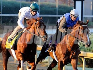 Drosselmeyer (left) and Birdrun at Churchill, October 29, 2011.