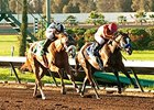 Tiz Midnight (right) fights off Warren's Veneda to win the Bayakoa Stakes.