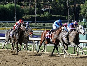 Havana finishing second in the 2013 Breeders' Cup Juvenile.