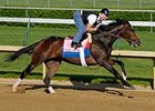 "Rachel Alexandra worked a very fast four furlongs at Churchill Downs April 27. <br><a target=""blank"" href=""http://www.bloodhorse.com/horse-racing/photo-store?ref=http%3A%2F%2Fgallery.pictopia.com%2Fbloodhorse%2Fgallery%2F81492%2Fphoto%2F8045148%2F%3Fo%3D1"">Order This Photo</a>"
