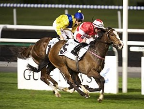 Elleval wins the 2013 Meydan Classic Trial.
