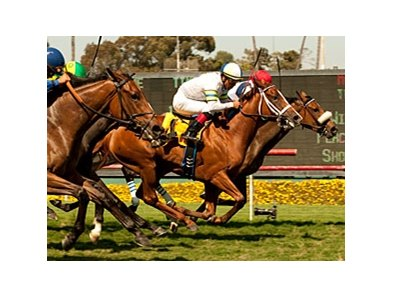 "Cambina (left, white cap) and Nereid finish together in the American Oaks.<br><a target=""blank"" href=""http://www.bloodhorse.com/horse-racing/photo-store?ref=http%3A%2F%2Fpictopia.com%2Fperl%2Fgal%3Fprovider_id%3D368%26ptp_photo_id%3D9599598%26ref%3Dstory"">Order This Photo</a>"