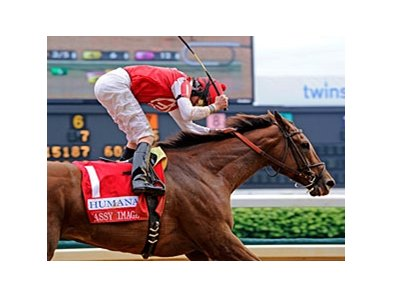 Sassy Image