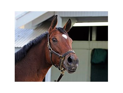 "Havre de Grace<br><a target=""blank"" href=""http://www.bloodhorse.com/horse-racing/photo-store?ref=http%3A%2F%2Fpictopia.com%2Fperl%2Fgal%3Fprovider_id%3D368%26ptp_photo_id%3D9722426%26ref%3Dstory"">Order This Photo</a>"