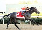 Win Willy tries for his fifth victory at Oaklawn Park in the Oaklawn Handicap.