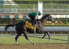 "Nonios worked 4 furlongs at Santa Anita on Oct. 30.<br><a target=""blank"" href=""http://photos.bloodhorse.com/BreedersCup/2012-Breeders-Cup/Works/26130247_gxH6nS#!i=2185230711&k=bDXFTsn"">Order This Photo</a>"