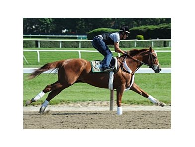 "I'll Have Another at Belmont Park on May 31, 2012.<br><a target=""blank"" href=""http://photos.bloodhorse.com/AtTheRaces-1/at-the-races-2012/22274956_jFd5jM#!i=1878247322&k=hc8Sft6"">Order This Photo</a>"