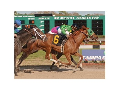 Rock Candy defeated Ameribelle (inside) and Don't Forget Gil (left) in the Suncoast Stakes.