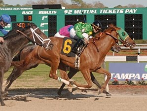 Rock Candy wins the 2009 Suncoast Stakes.