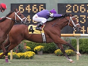 Golden Yank wins the 2011 Unbridled Stakes.