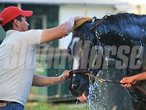 Rachel Alexandra at Monmouth on July 21, 2010.