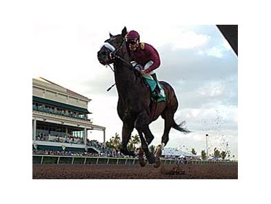 "Champion War Pass will be the heavy favorite in the Tampa Bay Derby.<br><a target=""blank"" href=""http://www.bloodhorse.com/horse-racing/photo-store?ref=http%3A%2F%2Fpictopia.com%2Fperl%2Fgal%3Fprovider_id%3D368%26ptp_photo_id%3D3670138%26ref%3Dstory"">Order This Photo</a>"