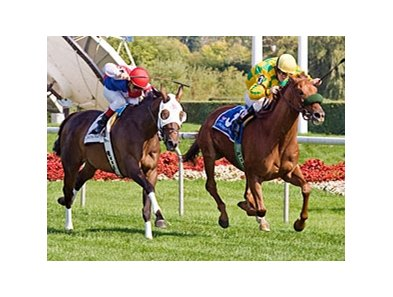 Free Fighter, who won the 2009 Stars and Stripes, will try for a repeat performance in 2010.