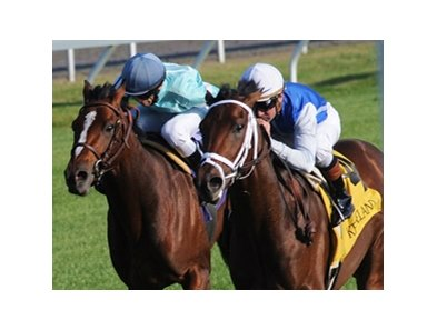 "Interactif turned in a dominating performance in the Bourbon Stakes at Keeneland.<br><a target=""blank"" href=""http://www.bloodhorse.com/horse-racing/photo-store?ref=http%3A%2F%2Fpictopia.com%2Fperl%2Fgal%3Fprovider_id%3D368%26ptp_photo_id%3D8547982%26ref%3Dstory"">Order This Photo</a>"