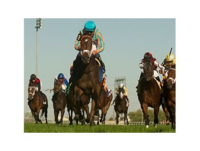 My Conquestadory runs away with the Summer Stakes at Woodbine.