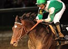 Royal Delta is among the Dubai World Cup nominees.