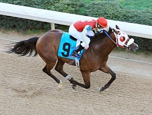 City Sage wins the 2012 Hot Springs.