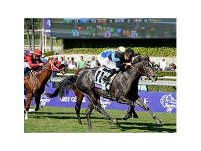"2012 Breeders' Cup Turf Sprint winner Mizdirection drew the 12 hole this time around.<br><a target=""blank"" href=""http://photos.bloodhorse.com/BreedersCup/2012-Breeders-Cup/Turf-Sprint/26130142_BL5TMr#!i=2192868162&k=MDWxQzc"">Order This Photo</a>"