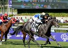 "2012 Breeders' Cup Turf Sprint winner Mizdirection faces 5 in the Monrovia Stakes.<br><a target=""blank"" href=""http://photos.bloodhorse.com/BreedersCup/2012-Breeders-Cup/Turf-Sprint/26130142_BL5TMr#!i=2192868162&k=MDWxQzc"">Order This Photo</a>"