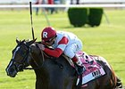 Real Solution Retired to Stand at Ramsey Farm