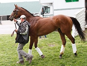 Beholder arrives at Churchill Downs for the Kentucky Oaks.