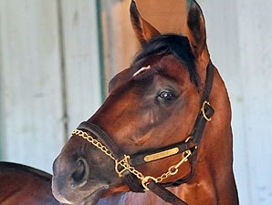Big Brown in First Work Since Belmont