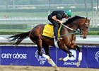 To Honor and Serve jogging prior to the Breeders' Cup.