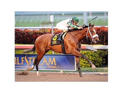 Mucho Macho Man won the 2012 Florida Sunshine Millions Classic.