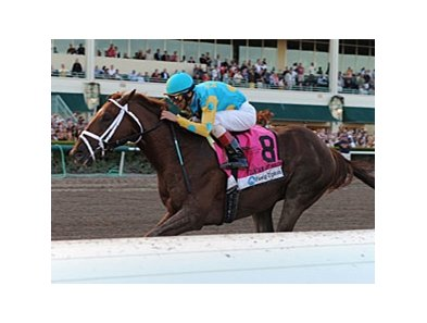 "Zayat Stables includes Eskendereya, winner of the 2010 Fountain of Youth.<br><a target=""blank"" href=""http://www.bloodhorse.com/horse-racing/photo-store?ref=http%3A%2F%2Fpictopia.com%2Fperl%2Fgal%3Fprovider_id%3D368%26ptp_photo_id%3D8802807%26ref%3Dstory"">Order This Photo</a>"