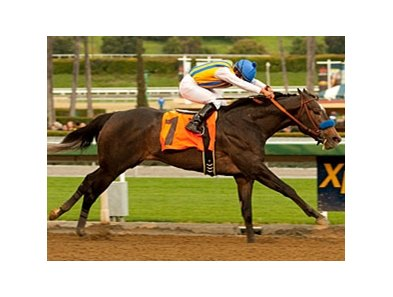 The Factor in the 2011 San Vicente Stakes.