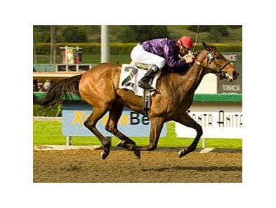 Lethal Heat made it three stakes wins in a row in the Santa Paula (gr. IIIT) March 30 at Santa Anita.
