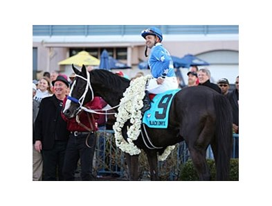 "Black Onyx<br><a target=""blank"" href=""http://photos.bloodhorse.com/AtTheRaces-1/at-the-races-2013/27257665_QgCqdh#!i=2426894649&k=vPRJQZp"">Order This Photo</a>"