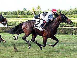 Speaking of Which wins the 2013 Tropical Turf Handicap.