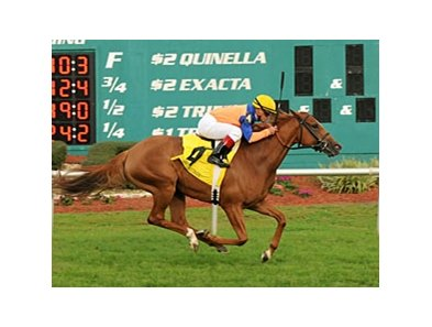 Zagora rolls in the Endeavour at Tampa Bay Downs.