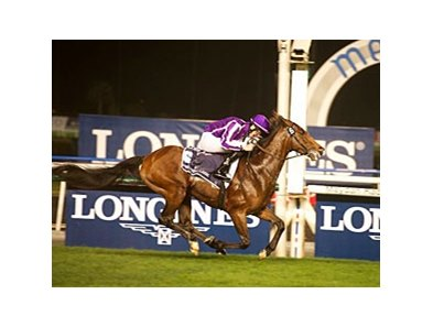 St Nicholas Abbey, winning the Dubai Sheema Classic earlier this year.