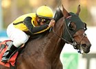 Sanagas Crushes Hollywood Turf Cup