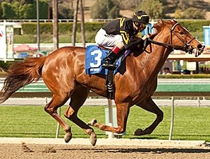 Judy the Beauty - Horse Profile - BloodHorse