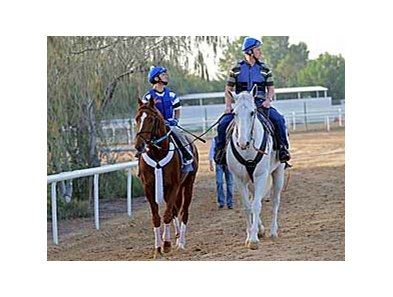 Curlin leads what is expected to be a large field for the 2008 Dubai World Cup  (UAE-I) March 29 at Nad al Sheba.