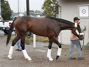 Uncle Mo arrives at Churchill Downs on October 26, 2010.