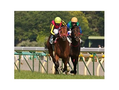 Deep Brillante takes the 2012 Tokyo Yushun (Japanese Derby) under Yasunari Iwata.