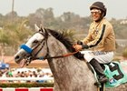 He Be Fire N Ice Retires to Rancho San Miguel