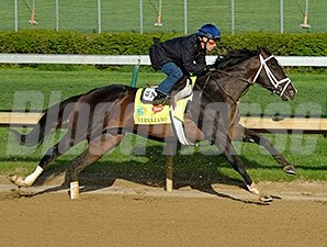 Verrazano works at Churchill Downs 4/21/2013.