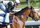"Noble's Promise carries the dreams of Chasing Dreams Racing into the Breeders' Cup.<br><a target=""blank"" href=""http://www.bloodhorse.com/horse-racing/photo-store?ref=http%3A%2F%2Fpictopia.com%2Fperl%2Fgal%3Fprovider_id%3D368%26ptp_photo_id%3D8603639%26ref%3Dstory"">Order This Photo</a>"