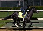 Mylute works towards the Kentucky Derby at Churchill Downs 4/27/2013.