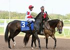 Politicallycorrect after the 2012 Oklahoma Derby.
