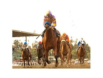 "Switch won the La Brea Stakes (gr. I) opening day Dec. 26 at Santa Anita.<br><a target=""blank"" href=""http://www.bloodhorse.com/horse-racing/photo-store?ref=http%3A%2F%2Fpictopia.com%2Fperl%2Fgal%3Fprovider_id%3D368%26ptp_photo_id%3D9346083%26ref%3Dstory"">Order This Photo</a>"